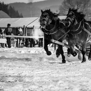 preteky koní