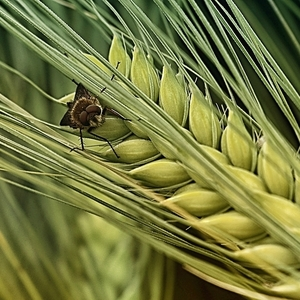 Poľný život