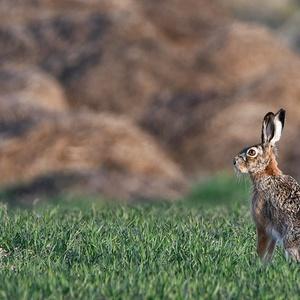 ...zajko bojko...:-)