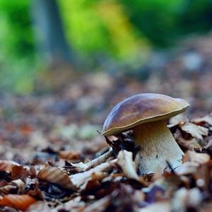 ...jesenné potešenie...:-) !