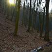 Prasátka v lese