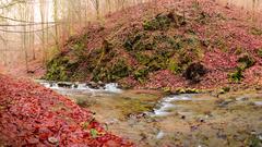 Tichý hlas Lesa