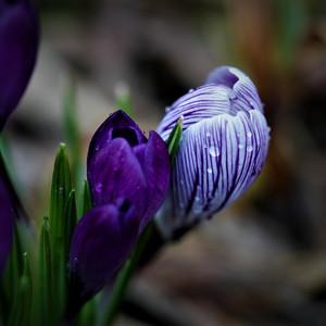 Jar prichádza..... 2