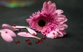 """""""krvavý"""" kvet"""