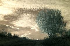 Strom v oblakoch