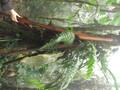 Primární les