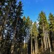 Rantířov - les