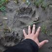 Stopa medvěda
