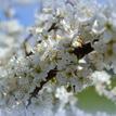Kvety na strome