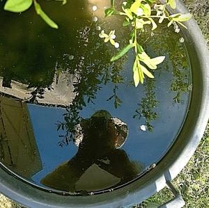 Záhradný autoportrét