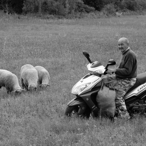 Moderný pastier