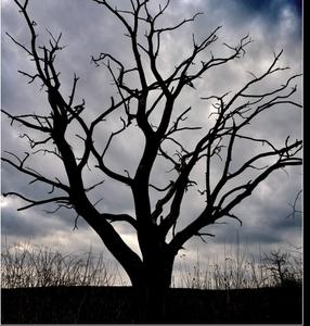 smrť stromu