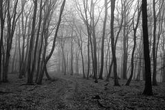 februárový les