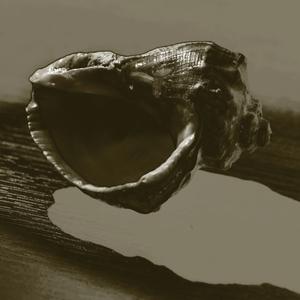 mušlička