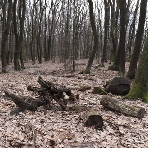 Predjarný les
