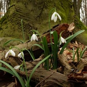 Jarný les