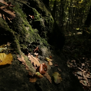 lesné zátišie