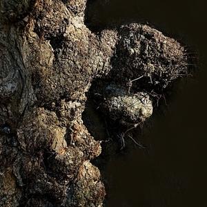 Drevovírus