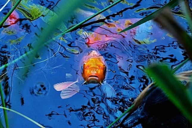 Rybacia impresia