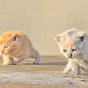 cubs....