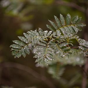 Tatranská príroda - papraď lesná