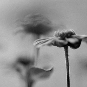 Medzi kvetmi