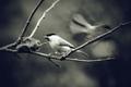 Vtáčí duch