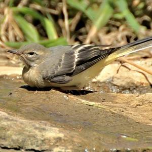 Vtáčik 2