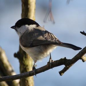 vtáčik 1