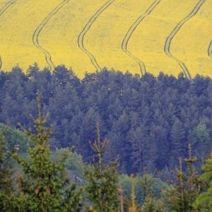 Ponad stromy