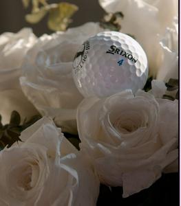 Medzi ružami
