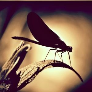 Vážka...