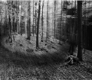 Bludný les
