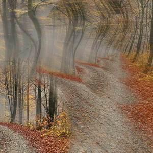 Mystérium lesa