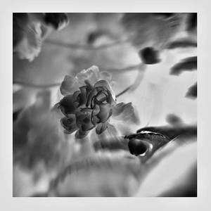 Kvet a púčik
