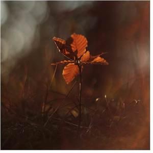 """""""Búčik na jeseň"""""""