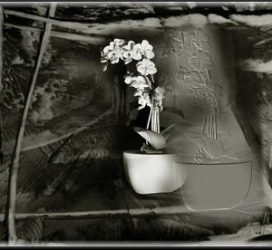 Orchidea 3