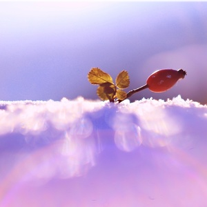V zajatí snehu...