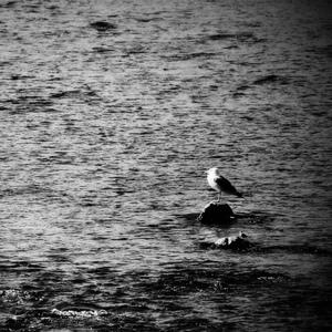 Dvaja vtáci
