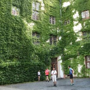V zajatí zelene