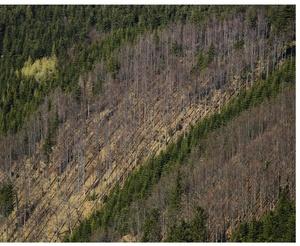 Pásma lesa