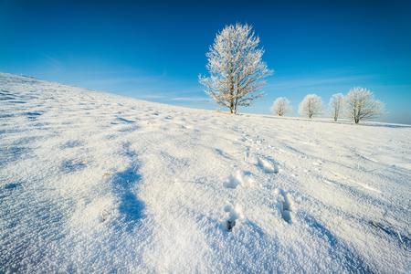 Prvá zima