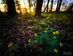 Jarná krása lesov