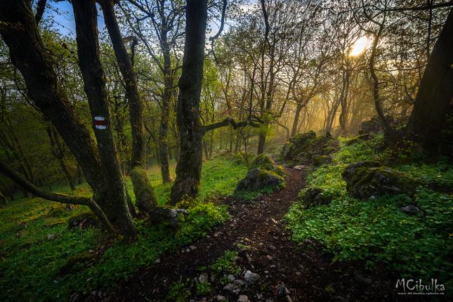 Karpatský prales