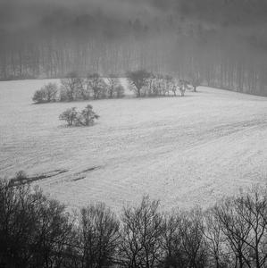 Zahmlené hory