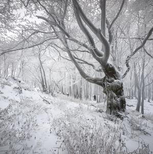 Zamrznutý les