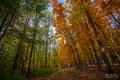 Cesta jeseňou