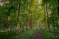 Cestička lesom