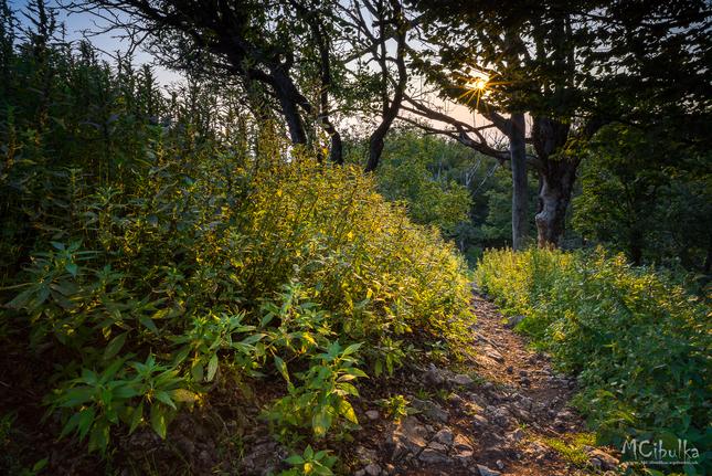 Krásy lesa