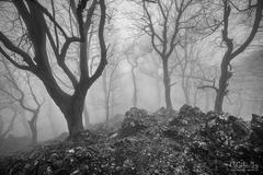 Karpaty v hmle